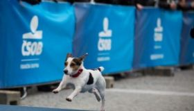 ČSOB Bratislava Marathon: V treskúcej zime sme vyšetrili 700 športovcov